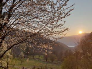 Kirschbaumblüte am Ortasee